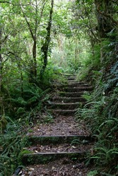 Trail path through trees with steps in New Zealand, Egmont national Park, Mt Taranaki