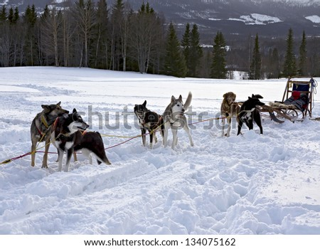 Trail Sled Dog Race in Sweden