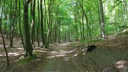 trail through a green forest