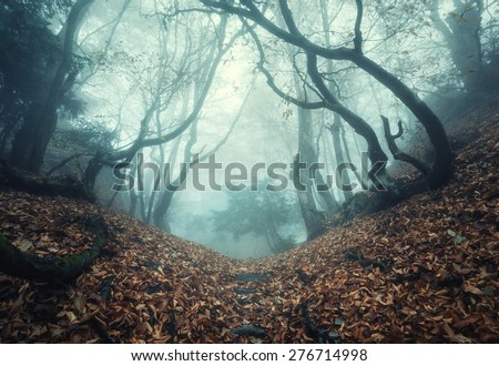 Trail through a mysterious dark old forest in fog. Autumn morning in Crimea. Magical atmosphere. Fairytale