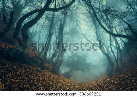 trail through a mysterious dark ...