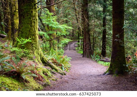 Trail through Forest at Lewis and Clark National and State Historical Parks #637425073