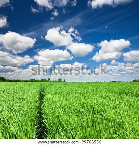 Trail through green field in tall grass