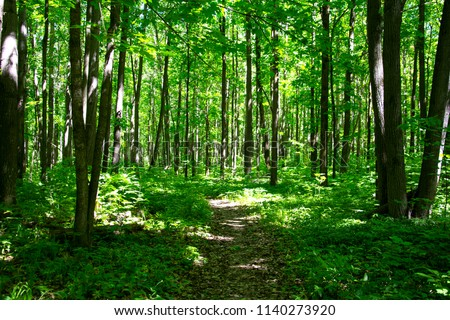 Trail through lush green forest.