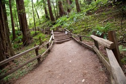 Trail through Muir Woods National Monument in San Francisco, California