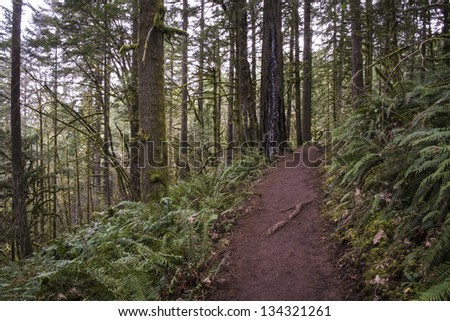 Trail through old growth temperate rainforest, Oregon