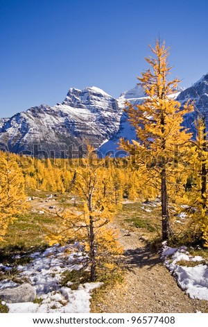 Trail to Larch Valley, Sentinel Pass, Mount Eiffel Summit, Near Lake Louise, Banff National Park, Alberta, Canada