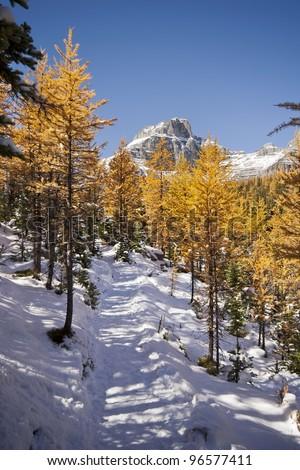 Trail to Larch Valley, Sentinel Pass, Mount Eiffel Summit, Near Lake Louise, Banff National Park, Alberta, Canada