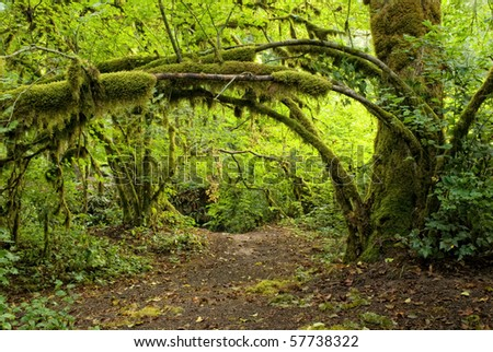 Trail under hanging trees in Oregon coastal forest