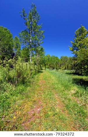 Trail winds through the Porcupine Mountains Wilderness State Park in Michigan