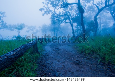 Trails in tropical forests in Thailand during the rainy season.