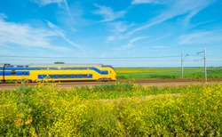 Train riding through nature in summer