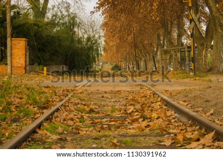 train tracks on an autumn afternoon with fallen tree leaves  #1130391962