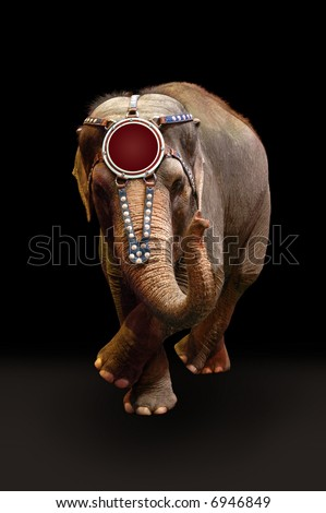 Trained elephant performing a dance over a dark background.