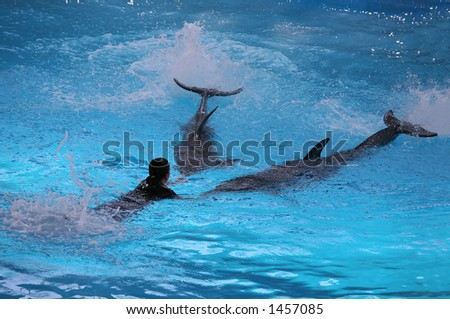 Trainer playing with her dolphins