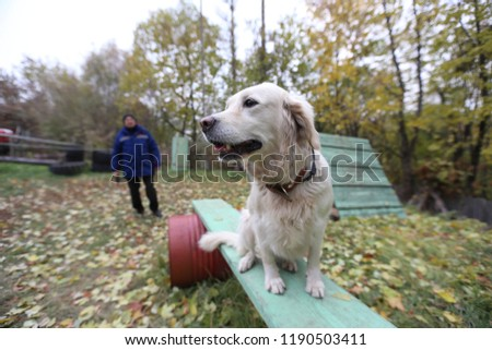training of a young dog with a character, learning tricks during active play on a special sports ground for animals, execution of commands of the owner, happy dog runs, jumps and sits  #1190503411