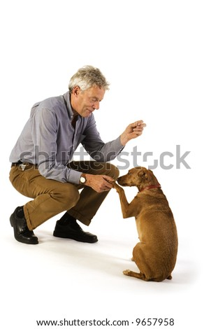 training the little brown dog