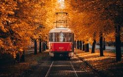 Tram going through corridor of trees in autumn.