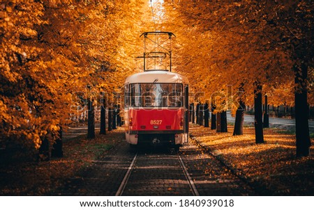 Tram going through corridor of trees in autumn. Stock photo ©