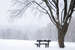 Tranquil bench under a barren oak tree covered with snow on a white meadow