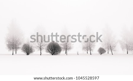 Tranquil black and white scene of birches in winter morning fog #1045528597