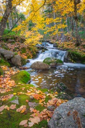 Tranquil forest scenery of autumn fall foliage colors with water stream inside Cape Breton Highlands National Park. Franey Mountain Trail. Autumn colors of Cape Breton, Nova Scotia