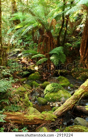 Tranquil rainforest respite, with softly-flowing creek, moss-covered boulders and logs, and tree ferns.  Victoria, Australia.