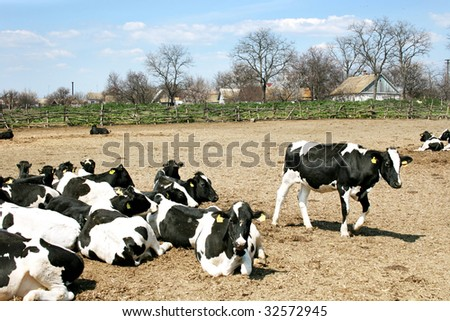 Tranquil rural scene with cows