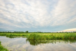 Tranquil scene of dutch polder landscape near Gouda, Holland with green meadows and ditches filled with water
