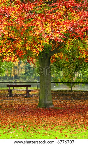 Tranquil Scene with Park Bench overlooking the River as Autumn leaves fall