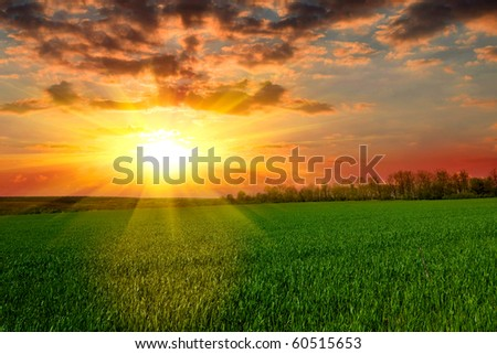 Tranquil sunset over green field