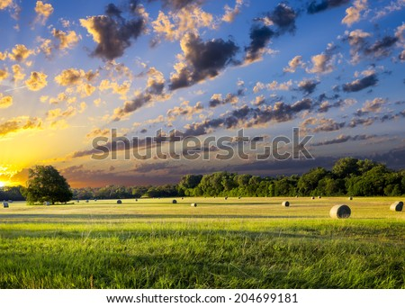 Tranquil Texas meadow at sunrise with hay bales strewn across the landscape