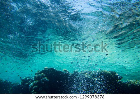 Tranquil underwater scene with copy space #1299078376