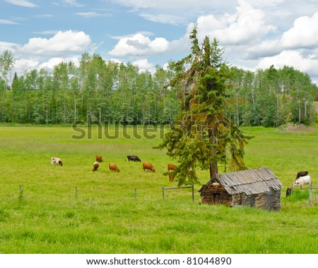 Tranquil view of an old barn and cows over forest and cloudy sky.