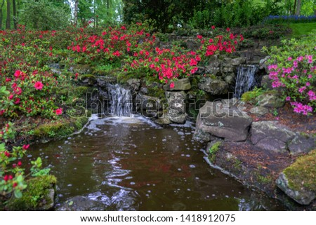 tranquil water feature in a lush Beautiful green woodland garden with dense foliage and rhododendron flowers.