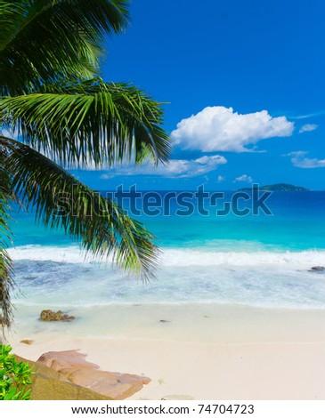 Tranquility Panorama Palms #74704723