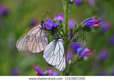 translucent butterflies sitting on a flower