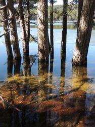 translucent water, apparent roots underwater