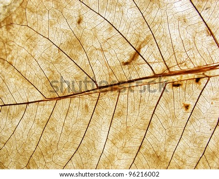 transparent leaf texture