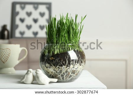 Transparent pot with fresh green grass on table