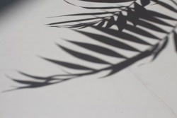 Transparent shadow of tropical leaves. Minimal background shadow palm leaves on the white marble. blogger content