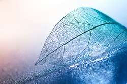 Transparent skeleton leaf with beautiful texture on a blue and pink background, glass with shiny water drops close-up macro . Bright expressive artistic image nature, free space.