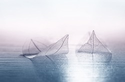 Transparent skeleton leaves in the form of ships at sea at sunrise in a fog on blue and pink background. Romantic artistic image close-up macro. Template  border wallpaper for travel dreams