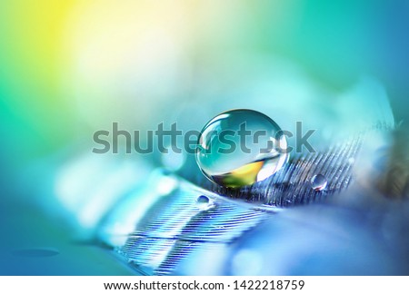 Transparent turquoise drop of pure water on feather, blurred blue background, macro. Elegant expressive artistic image fragility of nature. Copy space. Concept of sensitivity responsiveness to nature.