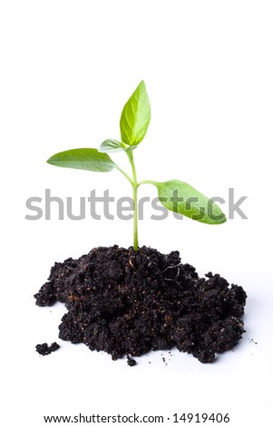 Transplant of a tree on a white background. Concept for environment conservation.