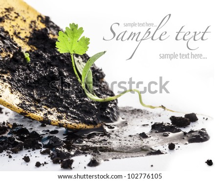 Transplanting plants and garden tools on a white background. The concept of environmental protection.  (with sample text)