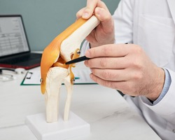 Traumatologist pointing pen to meniscus in a knee-joint anatomical teaching model, close-up. Human torn meniscus treatment concept