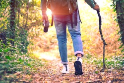 Travel and hiking along the forest path in autumn season - Young man walking in woods holding stick and camera - Concept of adventure, trekking and seasonal vacation with rear view of tourist on trail