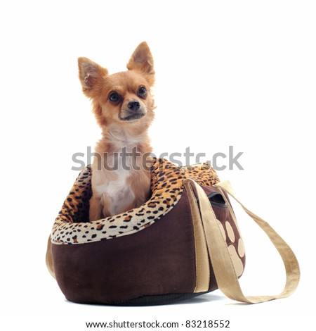 travel bag with chihuahua in front of white background