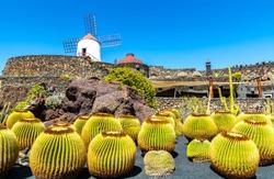 Travel concept. Amazing view of tropical cactus garden (Jardin de Cactus) in Guatiza village. Location: Lanzarote, Canary Islands, Spain. Artistic picture. Beauty world.
